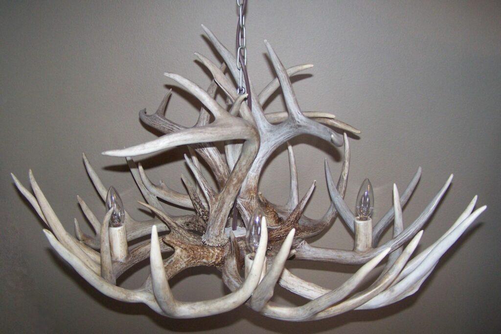 White-Tailed Deer Antler Chandelier