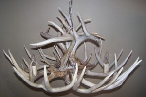 White-Tailed Deer Antler Chandelier